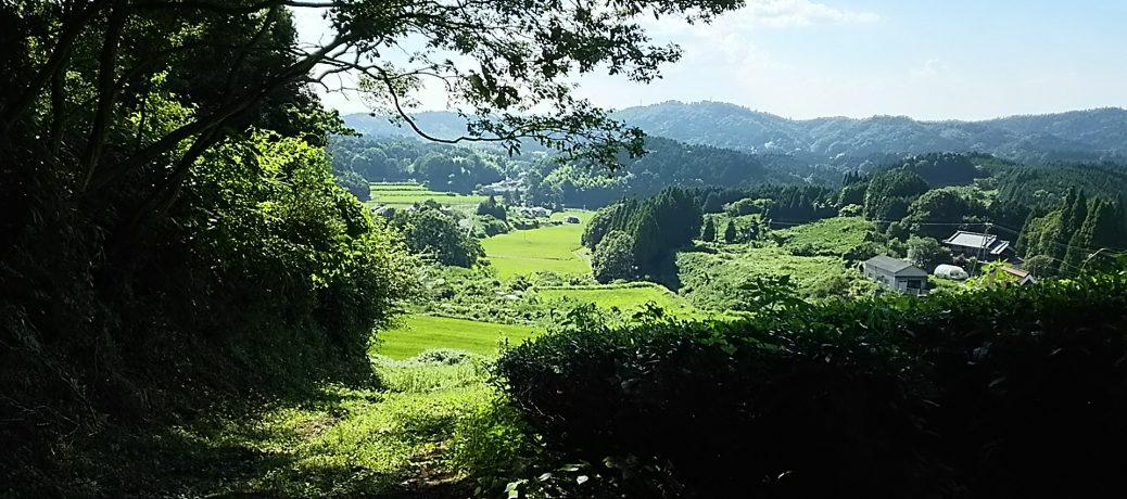 田原地区の風景 茶畑から